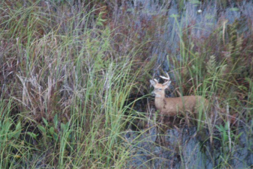 Deer Island Photo