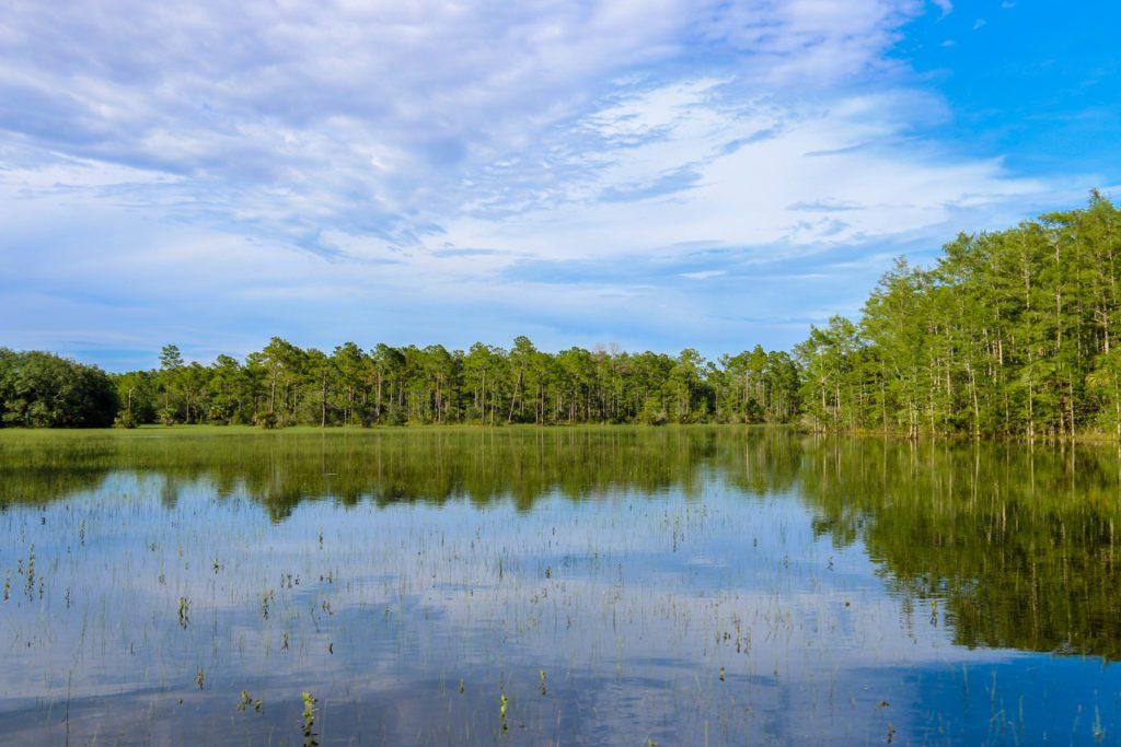 Everglades Prairie Wet Season