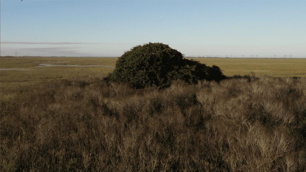 Tree Island in Everglades